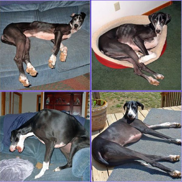 Antes e depois de animais adotados 2 17
