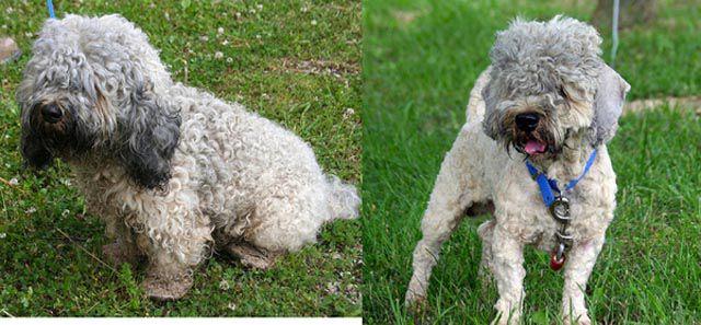 Antes e depois de animais adotados 2 18