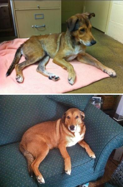 Antes e depois de animais adotados 2 19