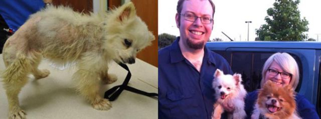 Antes e depois de animais adotados 2 20