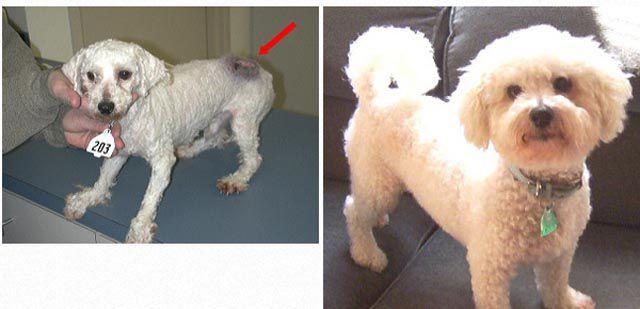 Antes e depois de animais adotados 2 21