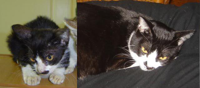 Antes e depois de animais adotados 2 22