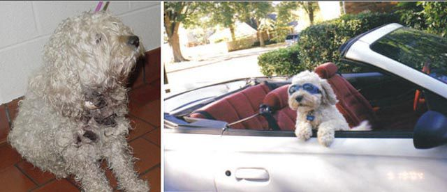 Antes e depois de animais adotados 2 23