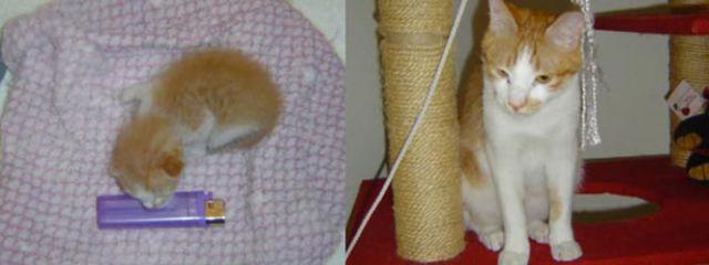 Antes e depois de animais adotados 2 24