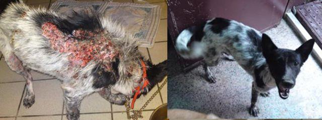 Antes e depois de animais adotados 2 25
