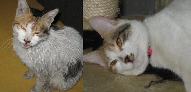 Antes e depois de animais adotados 2 26