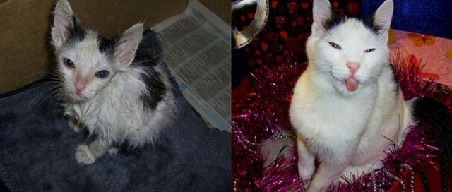 Antes e depois de animais adotados 2 27
