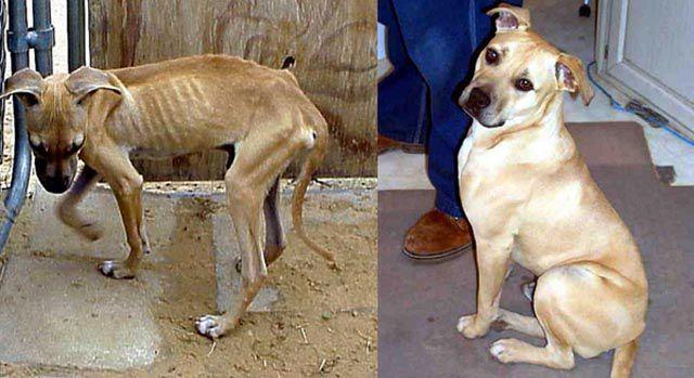 Antes e depois de animais adotados 2 28
