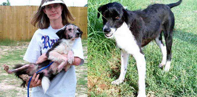 Antes e depois de animais adotados 2 29