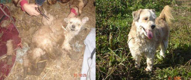 Antes e depois de animais adotados 2 30