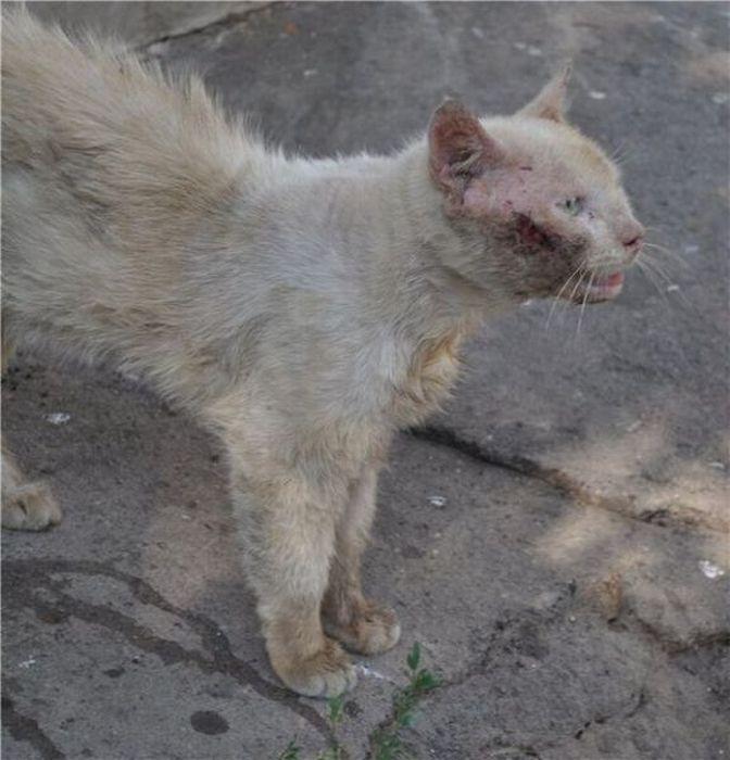 Antes - Animais resgatados 05