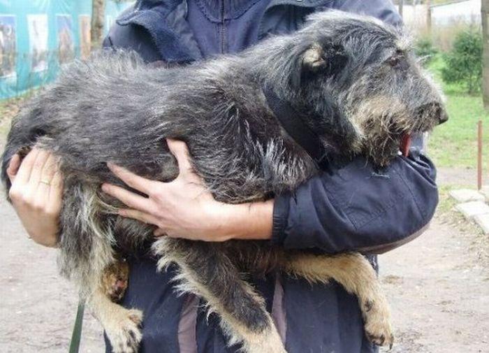 Antes - Animais resgatados 33