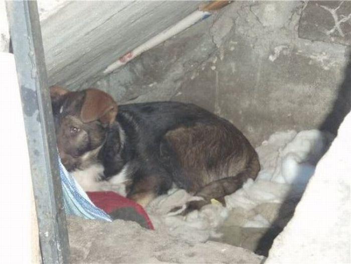 Antes - Animais resgatados 41