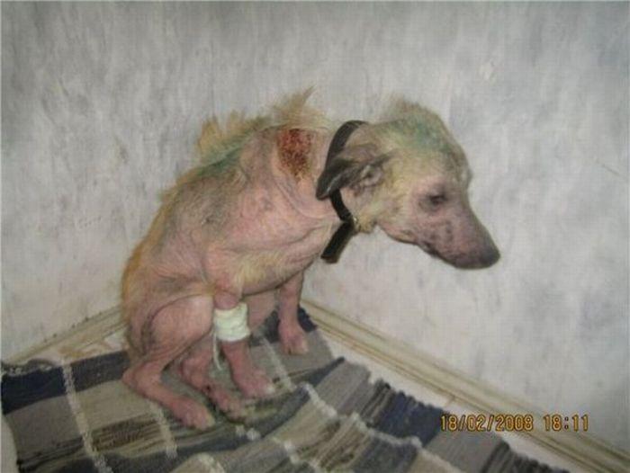 Antes - Animais resgatados 63