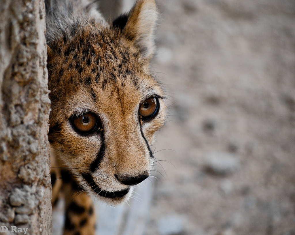 Animais tímidos 16