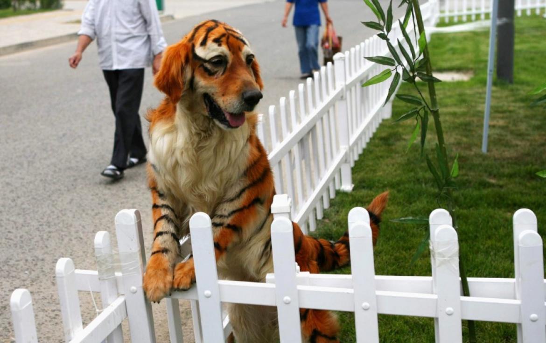 Animais de estimação tingidos para se parecerem com animais selvagens 05