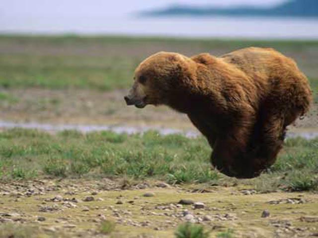 Engraçadas fotografias de animais pairando no ar 04