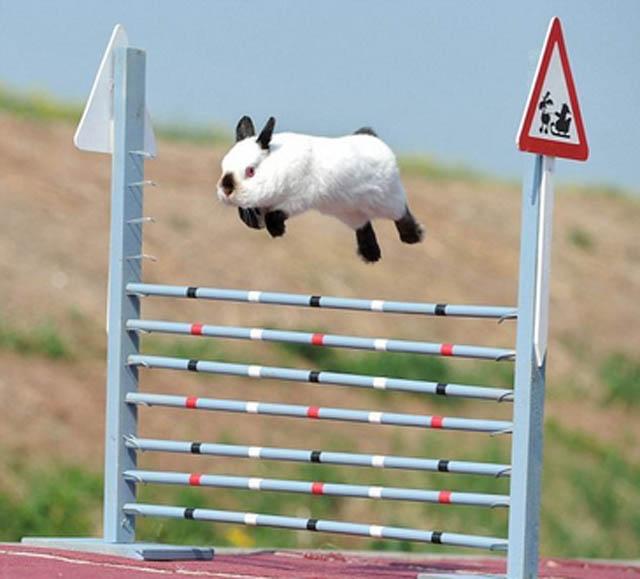 Engraçadas fotografias de animais pairando no ar 05