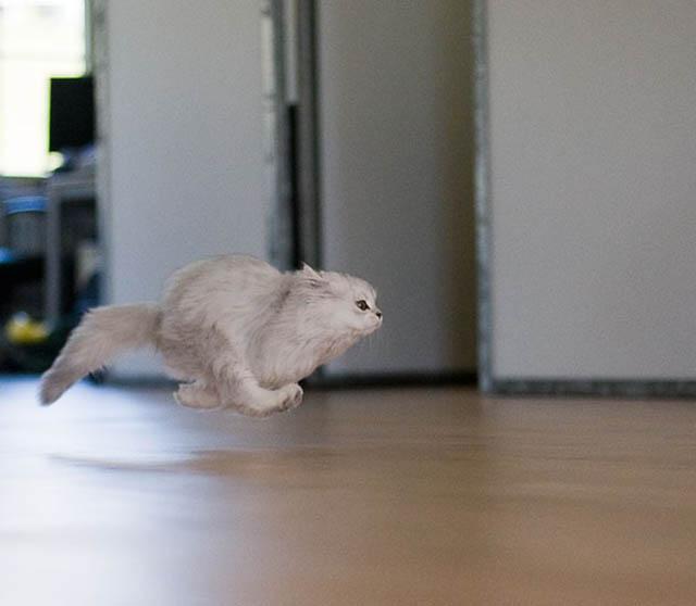 Engraçadas fotografias de animais pairando no ar 06