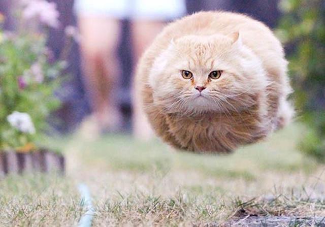 Engraçadas fotografias de animais pairando no ar 07