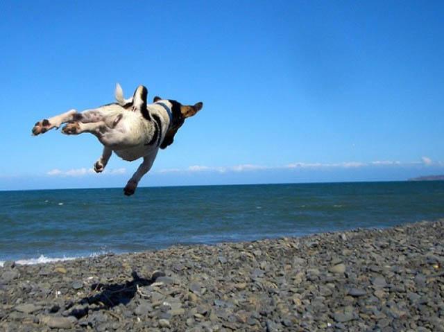 Engraçadas fotografias de animais pairando no ar 10