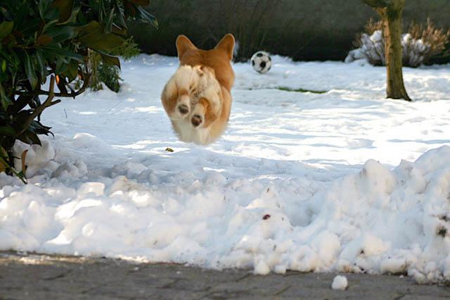 Engraçadas fotografias de animais pairando no ar 11