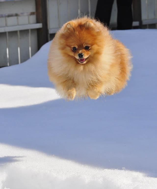 Engraçadas fotografias de animais pairando no ar 12