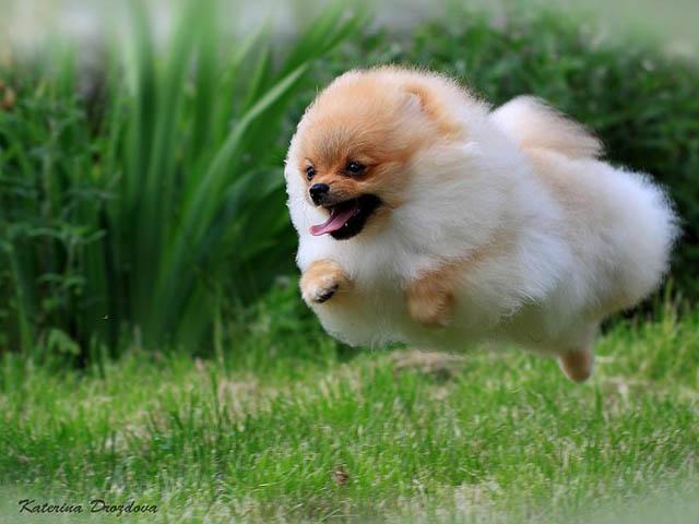Engraçadas fotografias de animais pairando no ar 13