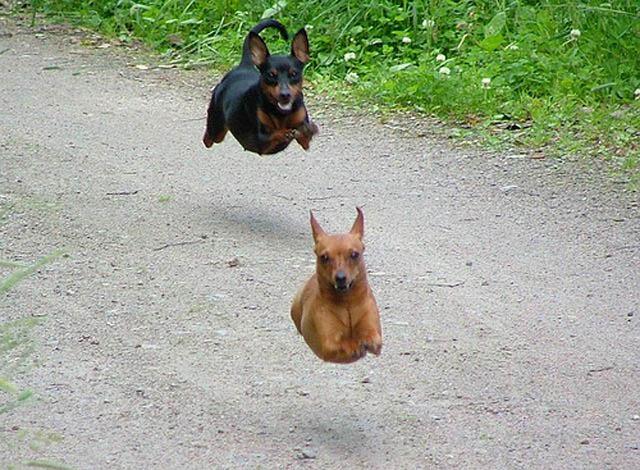 Engraçadas fotografias de animais pairando no ar 18