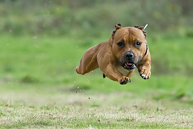 Engraçadas fotografias de animais pairando no ar 20