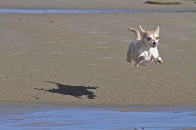 Engraçadas fotografias de animais pairando no ar 21