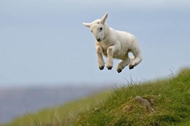 Engraçadas fotografias de animais pairando no ar 22