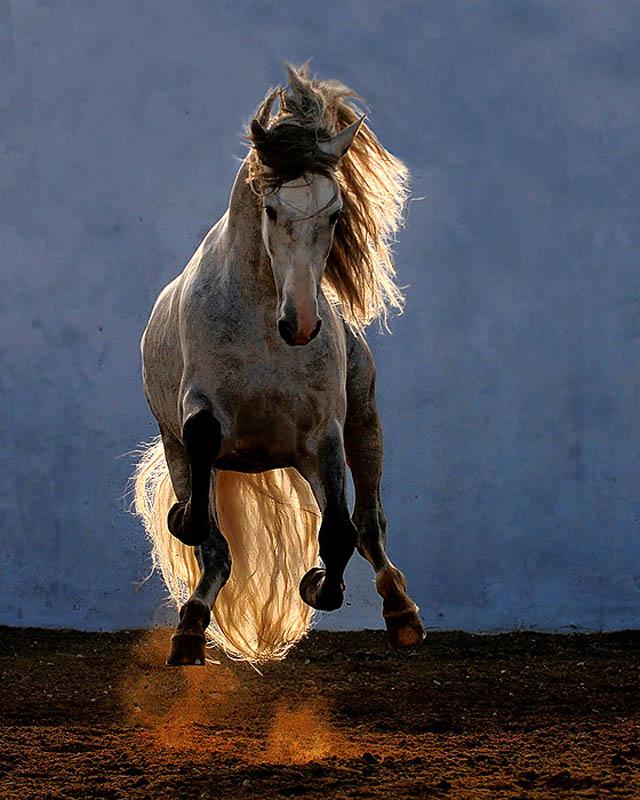 Engraçadas fotografias de animais pairando no ar 23