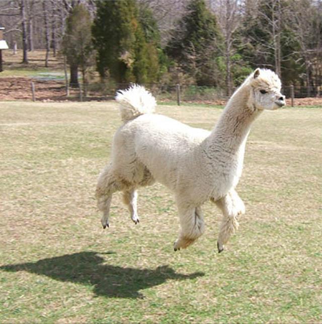 Engraçadas fotografias de animais pairando no ar 24