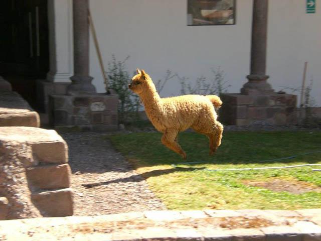 Engraçadas fotografias de animais pairando no ar 25