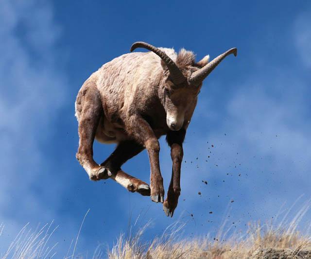 Engraçadas fotografias de animais pairando no ar 26