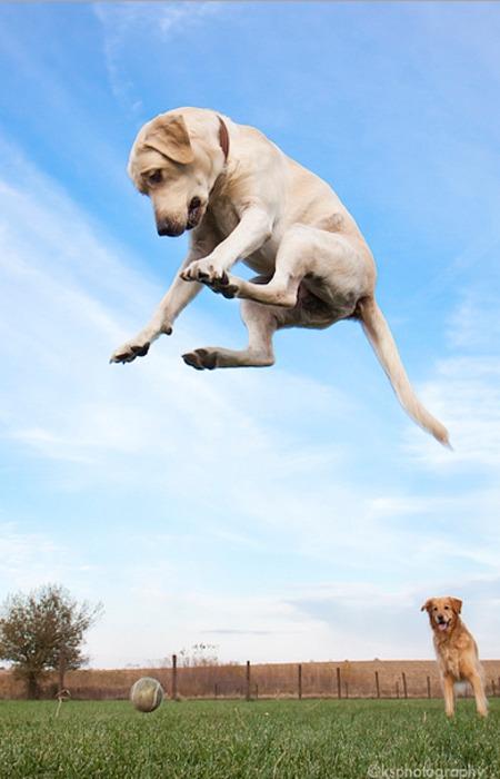 Engraçadas fotografias de animais pairando no ar 28