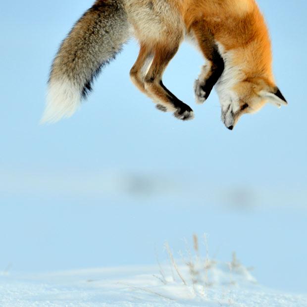 Engraçadas fotografias de animais pairando no ar 29
