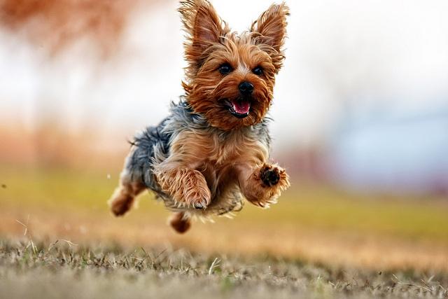 Engraçadas fotografias de animais pairando no ar 30