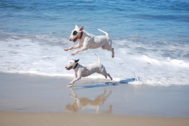 Engraçadas fotografias de animais pairando no ar 31