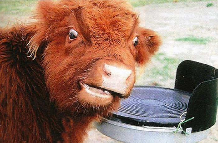 As fotos mais engraçadas de animais em 2012 01