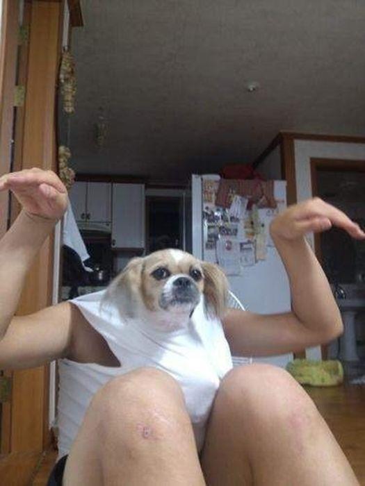As fotos mais engraçadas de animais em 2012 02