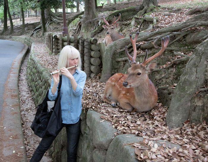 As fotos mais engraçadas de animais em 2012 03