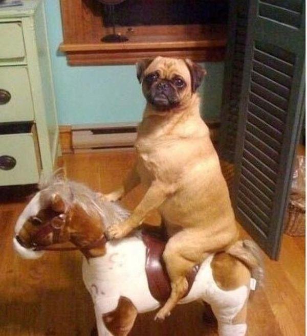 As fotos mais engraçadas de animais em 2012 22