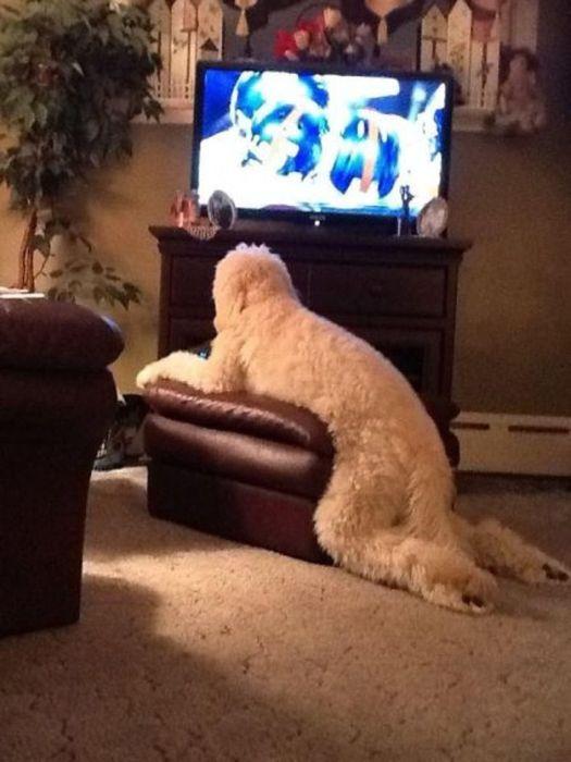 As fotos mais engraçadas de animais em 2012 23