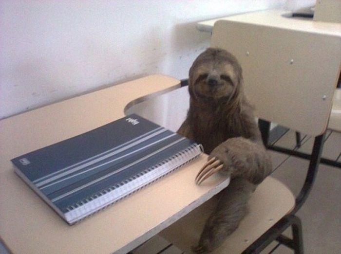 As fotos mais engraçadas de animais em 2012 30
