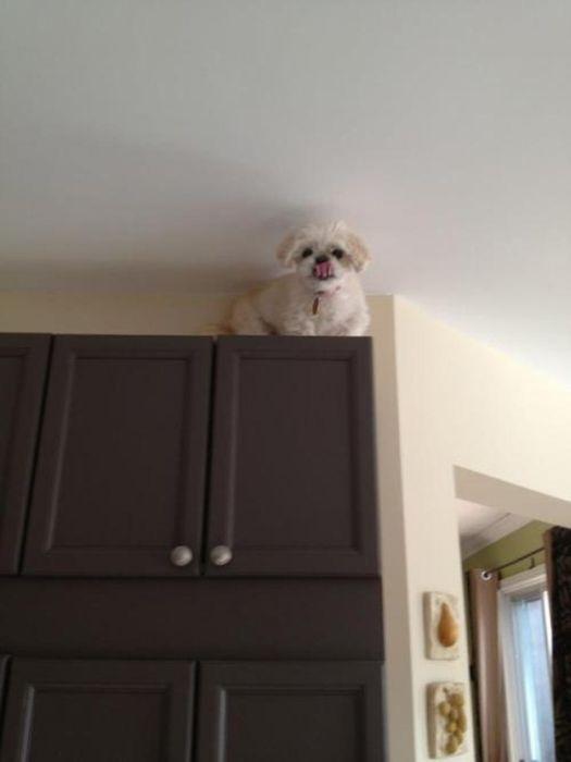 As fotos mais engraçadas de animais em 2012 31