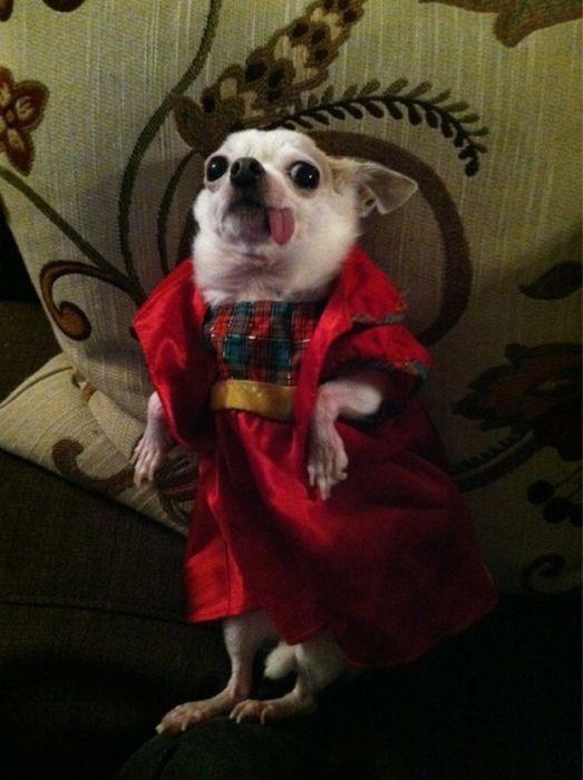 As fotos mais engraçadas de animais em 2012 32