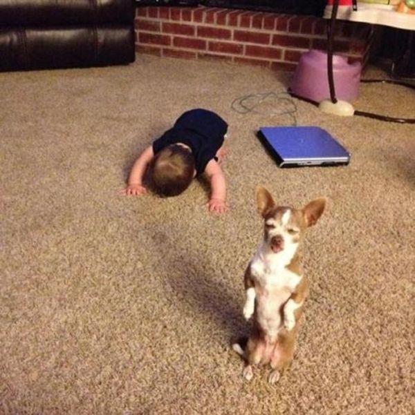 As fotos mais engraçadas de animais em 2012 33