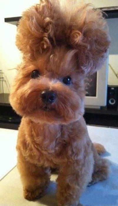 As fotos mais engraçadas de animais em 2012 35